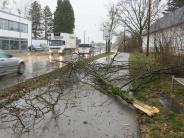 Sturm: Umgestürzte Bäume verursachen Straßenchaos