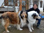 Steindorf: Geschundene Tiere werden in Steindorf versorgt