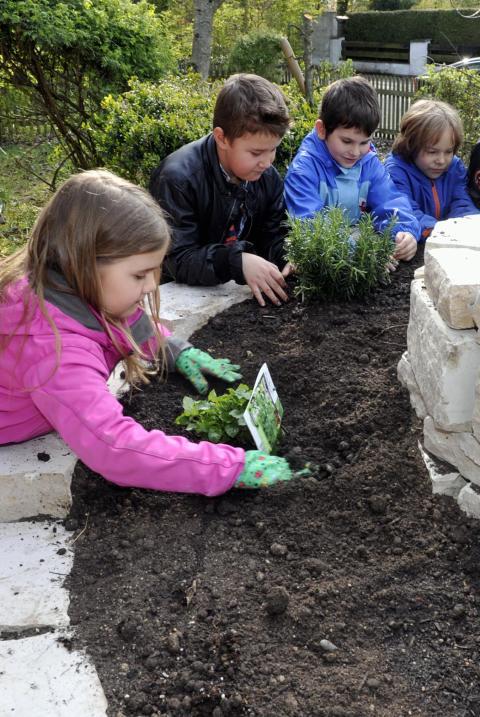 bildung kinder pflanzen selber gem se nachrichten friedberg augsburger allgemeine. Black Bedroom Furniture Sets. Home Design Ideas