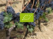 Ernährung: Verbraucher-News: Neues Bio-Logo der EU