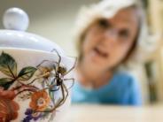 Forschung: Angst vor Spinnen und Schlangen anscheinend angeboren