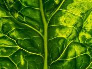 Stimmt das eigentlich: Macht Spinat wirklich Muskeln?