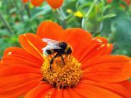Roggenburg/Ichenhausen: Biene Majas ungezähmter Schwester soll geholfen werden