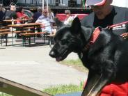 Kreis Günzburg: Sport für Hund und Besitzer