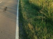 Verkehr: Ein Weg zum Gehen und Radeln – und nicht mehr