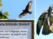 Münsterhausen: Lautlos greifen sie an