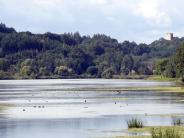 Kreis Günzburg: Was sich in unseren Gewässern tummelt