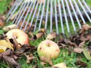 Landkreis Günzburg: Es darf im Garten auch mal unordentlich sein
