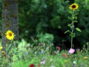 Illertissen: Wie der Kreis gegen das Insektensterben vorgehen will