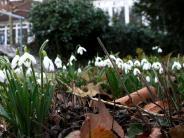 Landkreis Neu-Ulm: Heuschnupfen im Februar: Ist der Winter noch normal?
