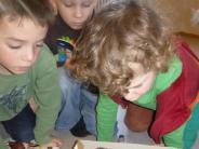 Illertissen/Altenstadt: Den Umweltschutz im Lehrplan