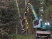 Durchforstung: So soll der Wald dem Klimawandel standhalten