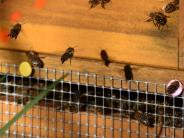 Babenhausen: Von Bienenkunde bis Rockwerkstatt