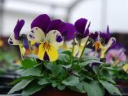 Ratgeber: Wie Sie Ihre Pflanzen heil durch die kalte Jahreszeit bringen