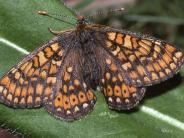 Obenhausen: Im Ried heißt es: Willkommen, Schmetterlinge