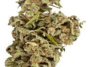 Sicherheit: Wenn bei der Faschingsparty Marihuana herumliegt