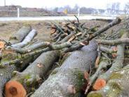 Illertissen: Gefällte Bäume: Frevel oder notwendiges Übel?