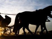Roggenburg: Wenn ein Hund die Pferde scheu macht