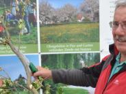 Illertissen: Wie ein alter Baum zu jungen Trieben kommt