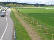 Natur: Baumbarriere soll Störche schützen