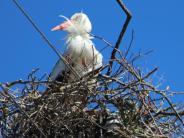 Obenhausen: Der Storch kehrt zurück