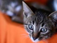 Weißenhorn: Katzenbabys im Überfluss