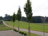 Oberroth: Oberroth investiert in neues Baugebiet