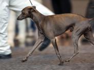 Weißenhorn: Das Tierheim rückt den Hund raus