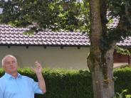 Bellenberg: Streit um Linde: Gesunder Baum muss weg