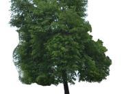 Natur: Mitarbeiter für Grünflächen gesucht