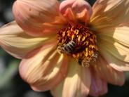 Illertissen: Farbenfrohe Blüten, auf die Insekten fliegen
