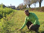 Kettershausen: Grünlandprojekt: Weil Wiese nicht gleich Wiese ist
