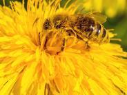 Illertissen: Stadt bietet Bienen bald ein blühendes Buffet