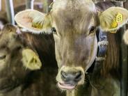 Unterallgäu: Im Raiffeisen-Warengeschäft steht eine große Fusion bevor