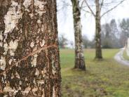 """Gannertshofen: Der """"Baumfeind"""" schlägt wieder zu"""