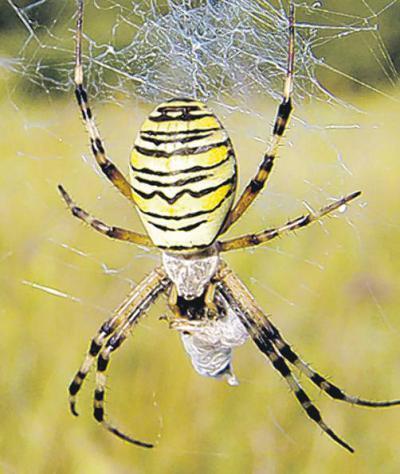 Spinnenarten