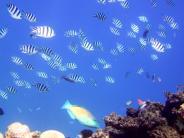 : Sechs Meter tief im Meer träumen