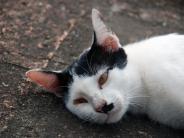Tiere: Vernachlässigte Tiere dem Veterinäramt melden