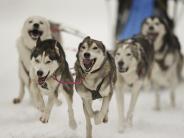 : Lappland: Winterparadies jenseits des Polarkreises