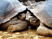 : Wo Tiere die Größten sind