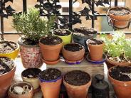 München: Urteil: Keine Bäume auf Balkon von Mietwohnung erlaubt