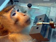 Tübingen: Tierschützer protestieren gegen Affenversuche in Tübingen