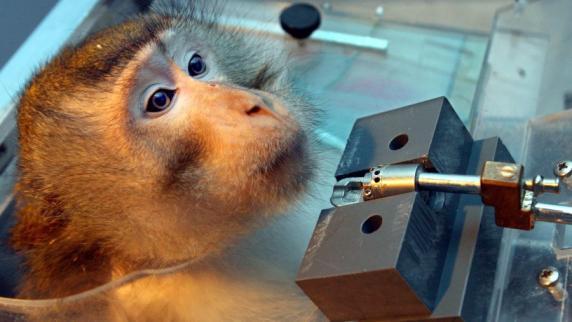 Kriminalität: Strafbefehle wegen Misshandlung von Affen erlassen