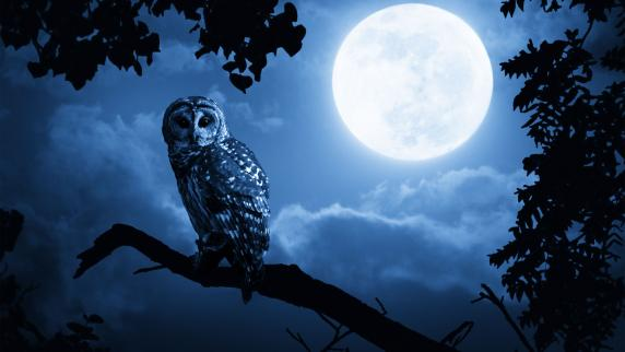 Freizeit: Gärtnern mit dem Mondkalender: Esoterik oder nützlich ...