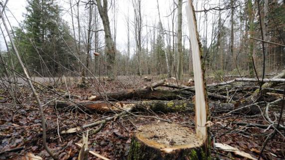 Augsburg: Männliche Leiche im Stadtwald entdeckt - Polizei veröffentlicht Foto