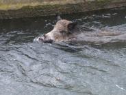 Augsburg: Wildschwein-Alarm: Zwei Verletzte, acht tote Tiere, Bahnverkehr dicht