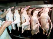 Vogelgrippe: Zehn Jahre danach: Was wurde eigentlich aus der Vogelgrippe?