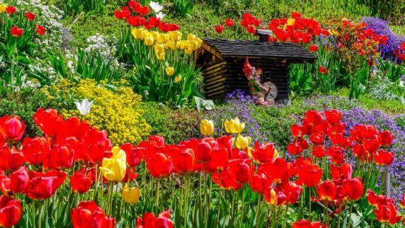 Garten: Tulpe, Thuja Und Efeu: Bei Diesen Pflanzen Sollten Sie ... Tulpen Im Garten Pflanzen