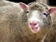 Wissenschaft: Vor 20 Jahren wurde Dolly geklont