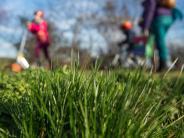 Garten: Was tun bei glitschigen Algen im Rasen?